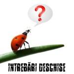 WP - INTREBARI DESCHISE
